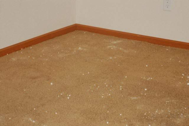 clean carpet without chemicals