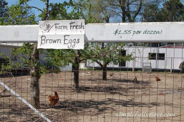 Amish Farm Fresh Eggs