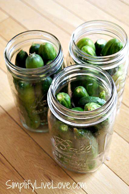 Pack your cucumbers tightly into your mason jars before pouring the pickle brine in.
