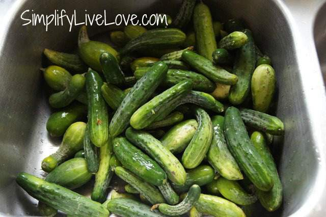 The first step to getting great dill pickles is to have great cucumbers! Wash and prep your cucumbers before starting your canning process.