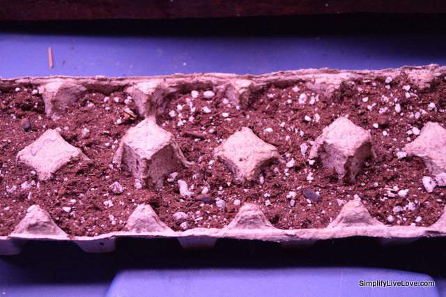 seeds planted in egg carton