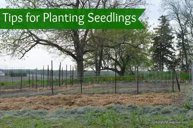 tips for planting seedlings
