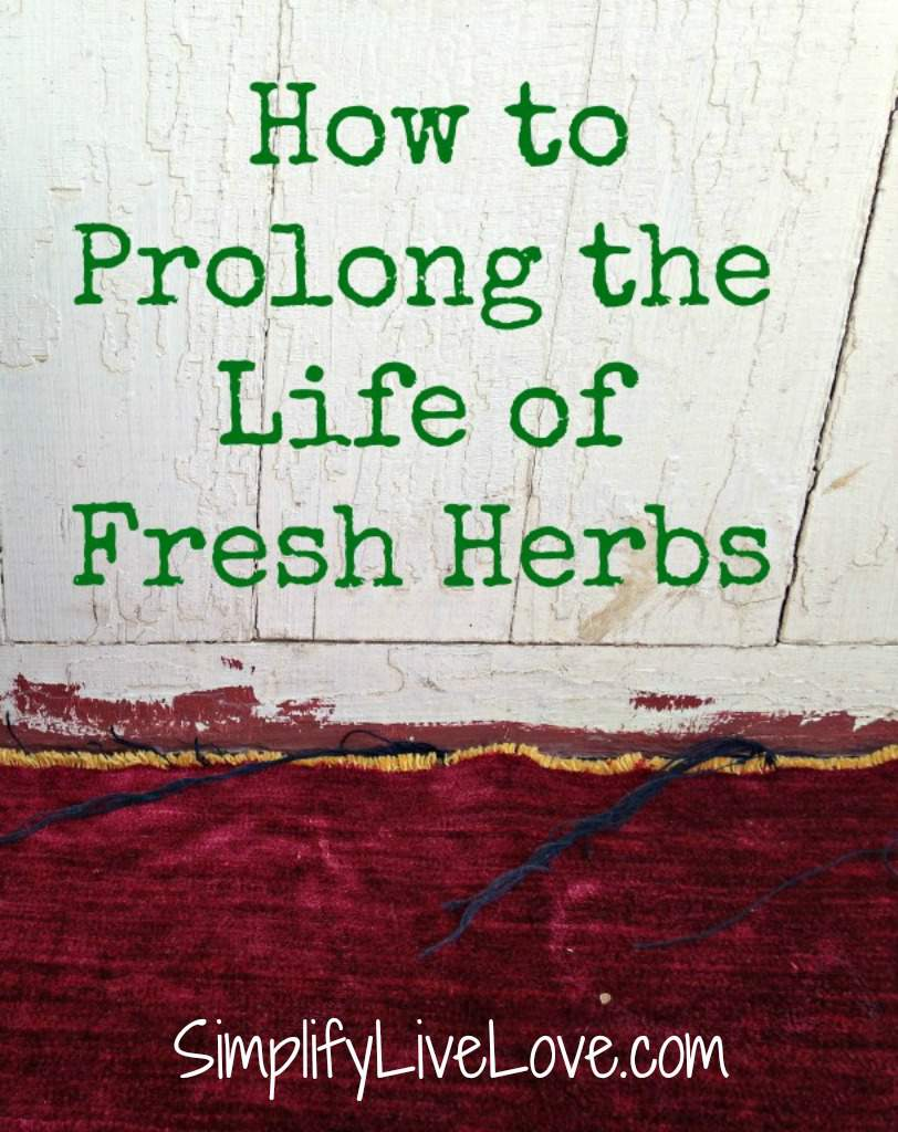 How to prolong life of fresh herbs