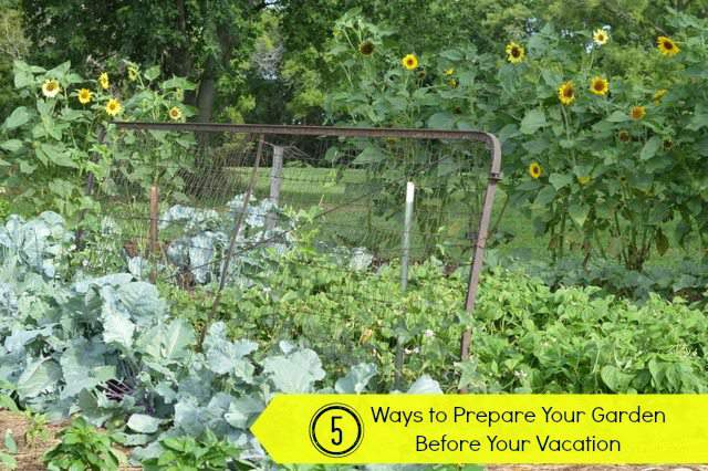 5 ways to prepare your garden before your vacation