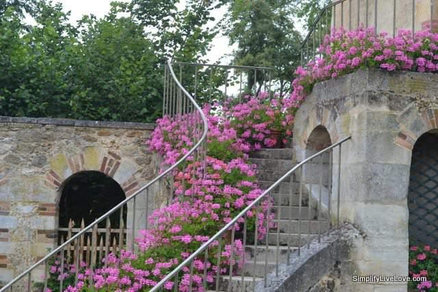 geraniums at versailles