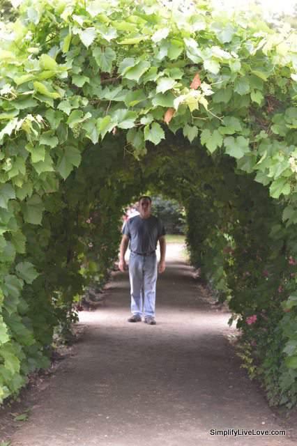 grape arbors