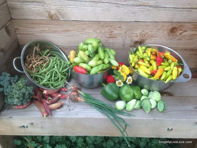 last garden harvest bowls of end of season vegetables