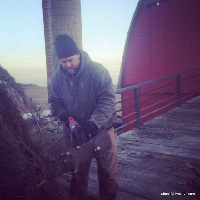 bringing the tree in the barn