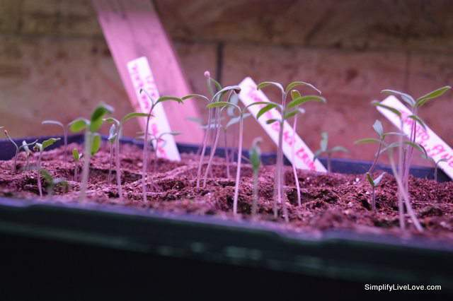 5 helpful supplies for starting seeds