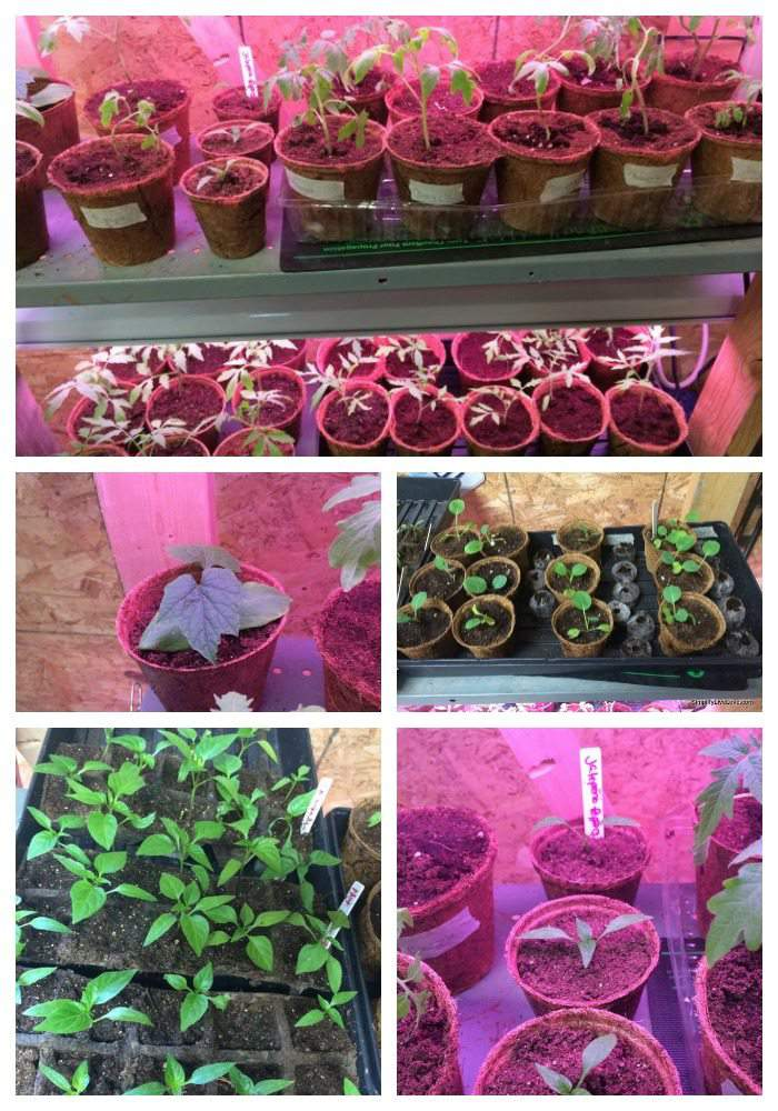March Seedlings