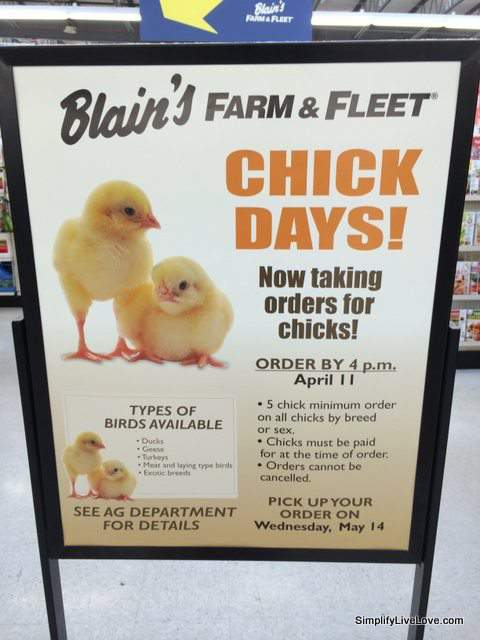 Farm & Fleet chicks
