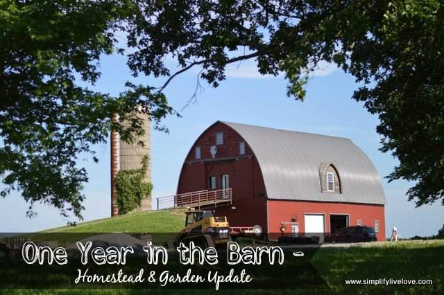 One Year in the Barn - Homestead & Garden Update