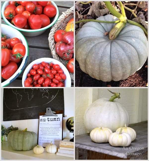 Late September Harvests - An Oregon Cottage