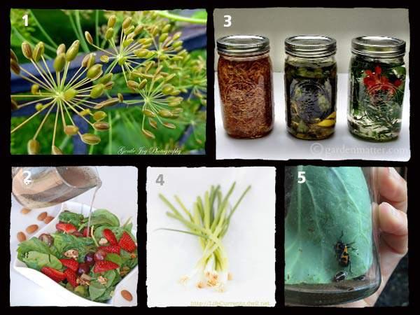 Tuesday-Garden-Party-Features-9-9
