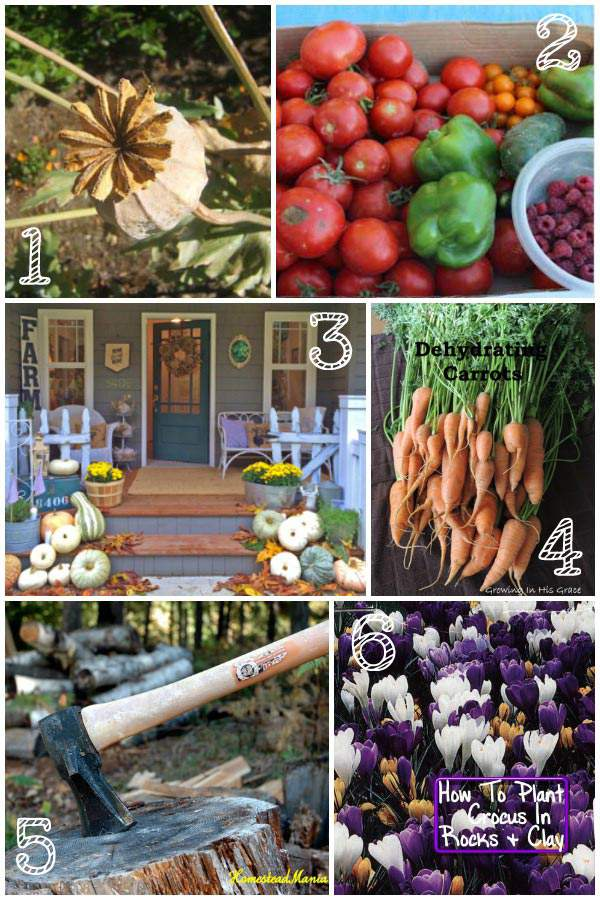 #TGP Tuesday Garden Party Featured-Posts-Collage-Oct3