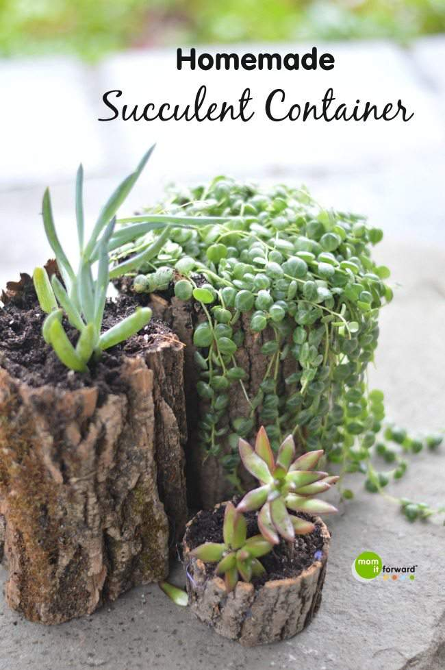 Homemade-Succulent-Container-1
