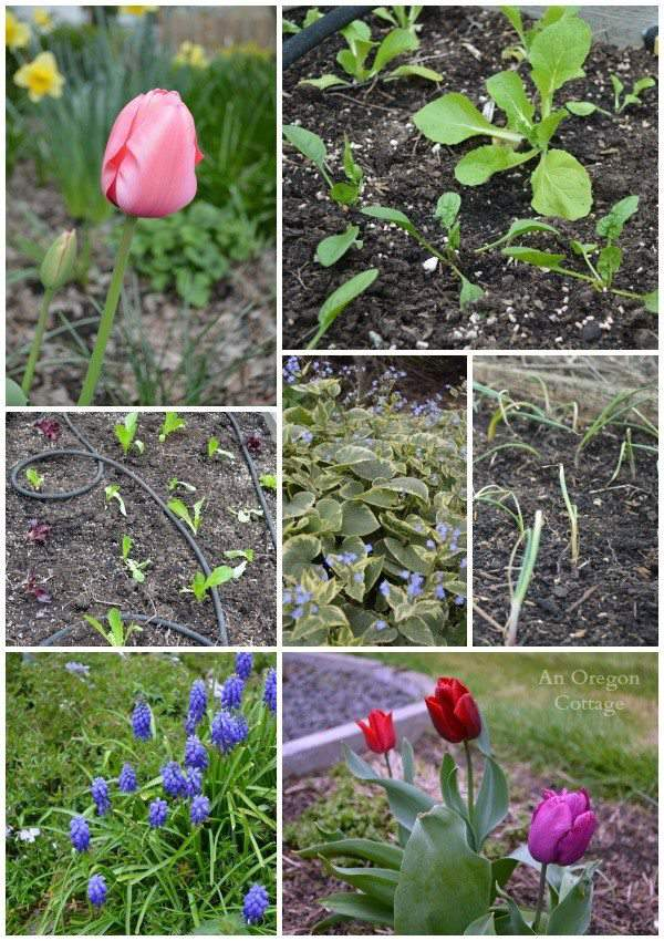 uesday Garden Party AOC collage 3.24.15