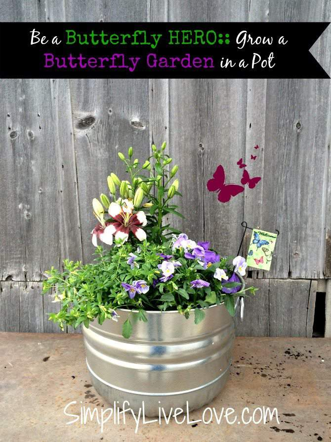 Butterfly Garden in a Pot