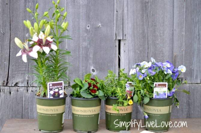 How to Plant a Butterfly Garden in a Pot #Monrovia #ad-010