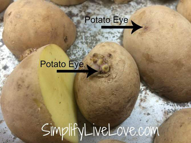 How to prepare seed potatoes for planting - cut