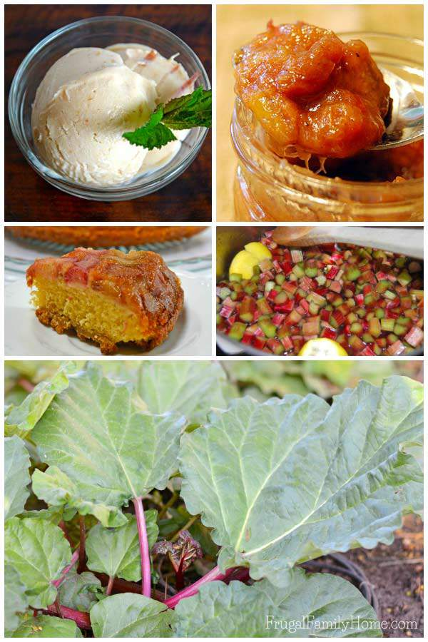 Rhubarb-Frugal-Family-Home