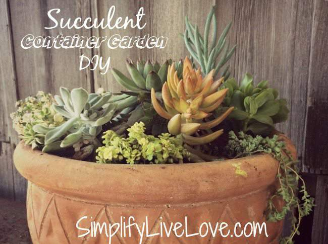 Succulent Container Garden DIY - final