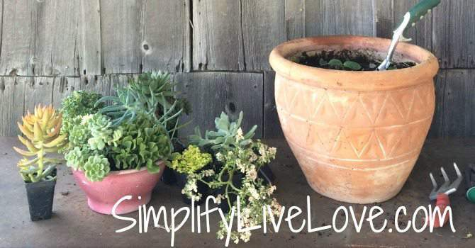 Succulent Planter DIY - gather suppplies