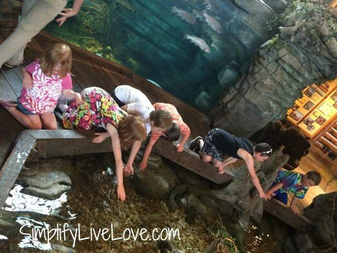 5 things to do with kids in Springfield , Missouri-pet the fish at Bass Pro Shops by SimplifyLiveLove.com