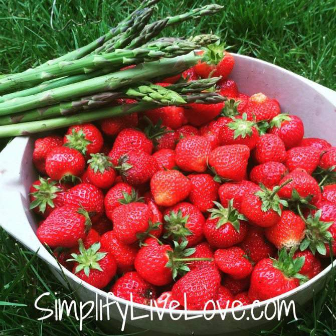 Homemade Strawberry Syrup Recipe & Canning Instructions - bowl full of strawberries