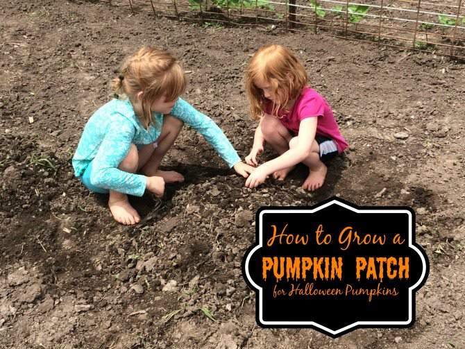 How to Grow a Pumpkin Patch for Halloween Pumpkins 2