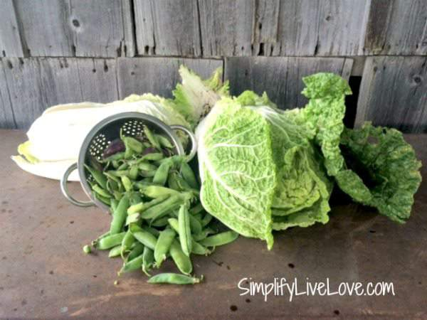 peas & cabbage