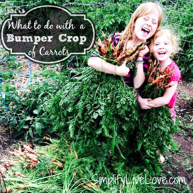 How to Preserve a Bumper Crop of Carrots from SimplifyLiveLove