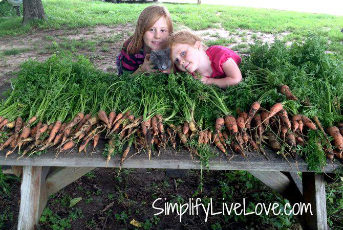 How to Preserve a Bumper Crop of Carrots - table full of garden fresh carrots from SimplifyLiveLove.com