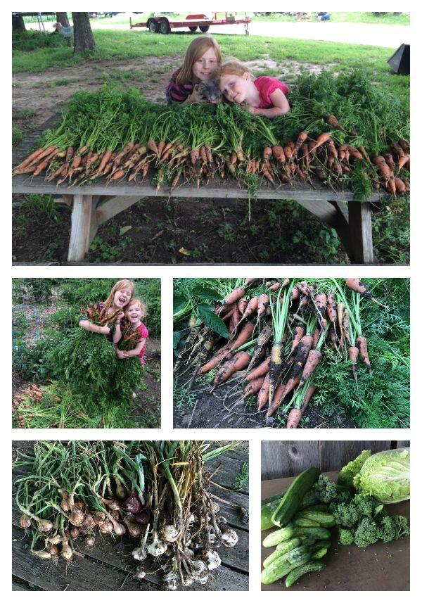 TGP harvest collage SimplifyLiveLove.com