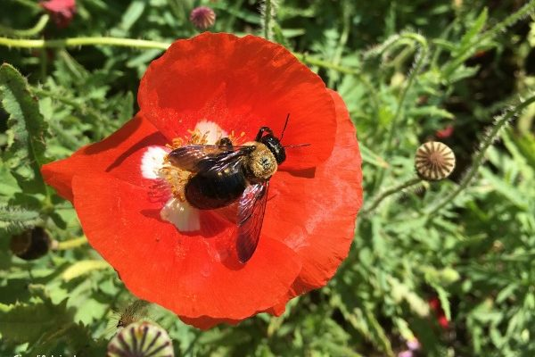 How to Save the Bees – 5 Easy Ways YOU Can help