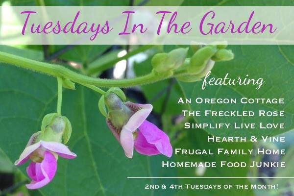 Updated-Tuesdays-in-the-Garden