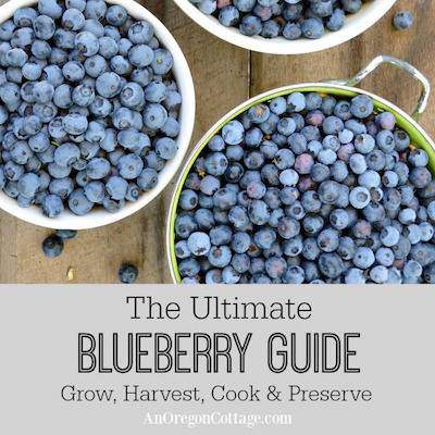 blueberry guide