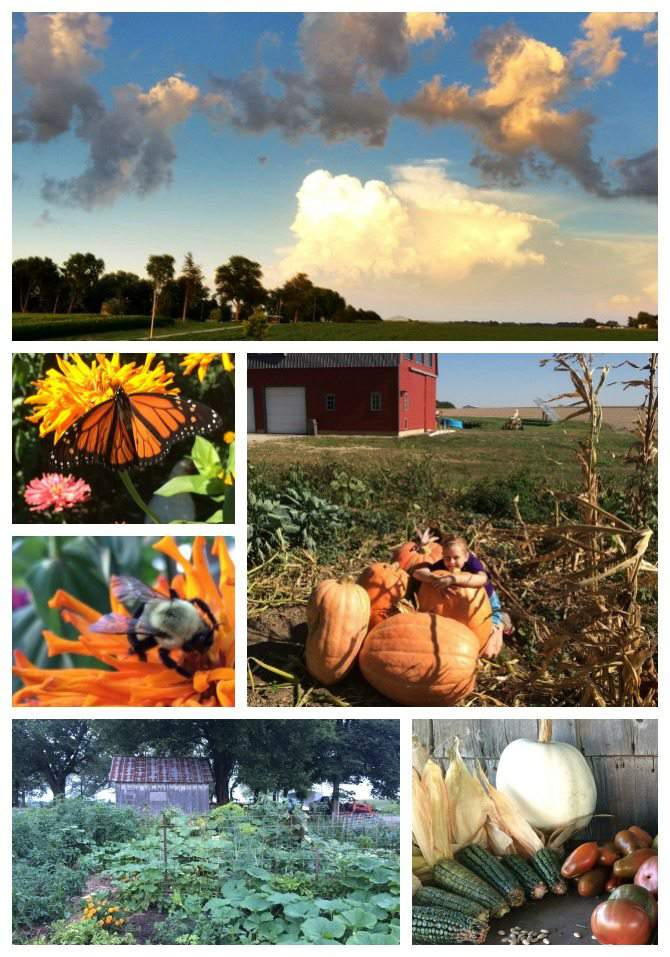 Fall 2015. 2015 in Review - a year on a 5 acre homestead in Eastern Iowa. from SimplifyLiveLove.com
