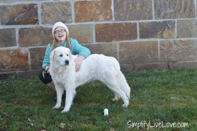 Grooming a Great Pyrenees Dog