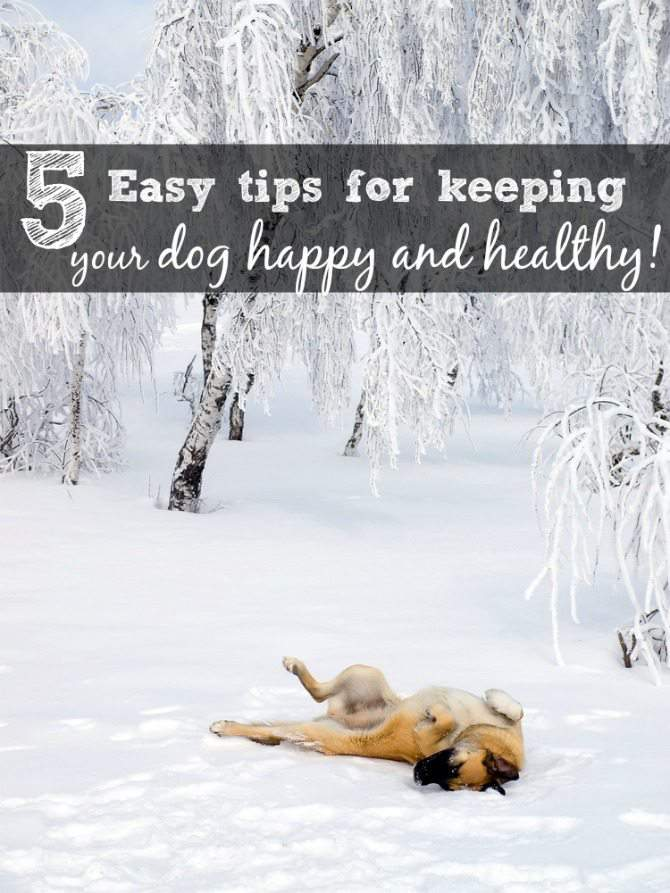 5-tips-to-keep-your-dog-happy-and-healthy.-2-is-playing-with-your-dog-Do-you-know-what-the-other-4-tips-are