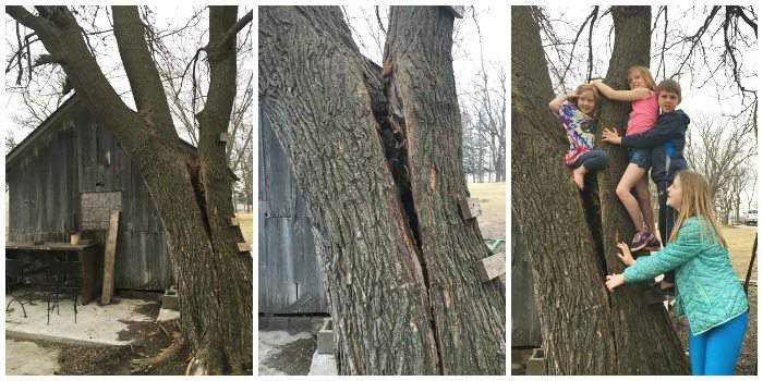 Cutting down the garden shed tree