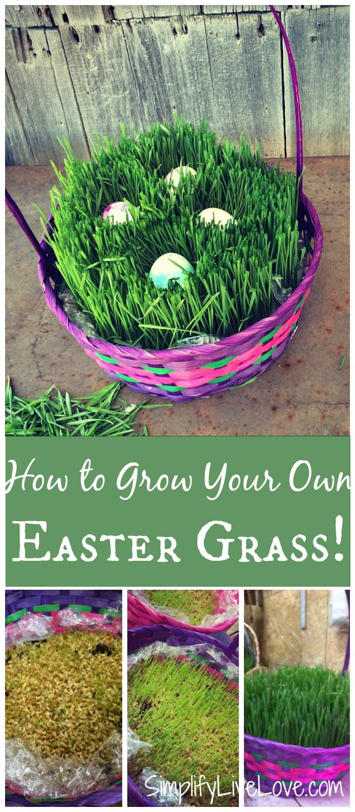 It's actually a lot easier to grow your own Easter Grass than you may think. And it doesn't even take that all. All you need is a few supplies and about a week! So keep reading and try something new this year!
