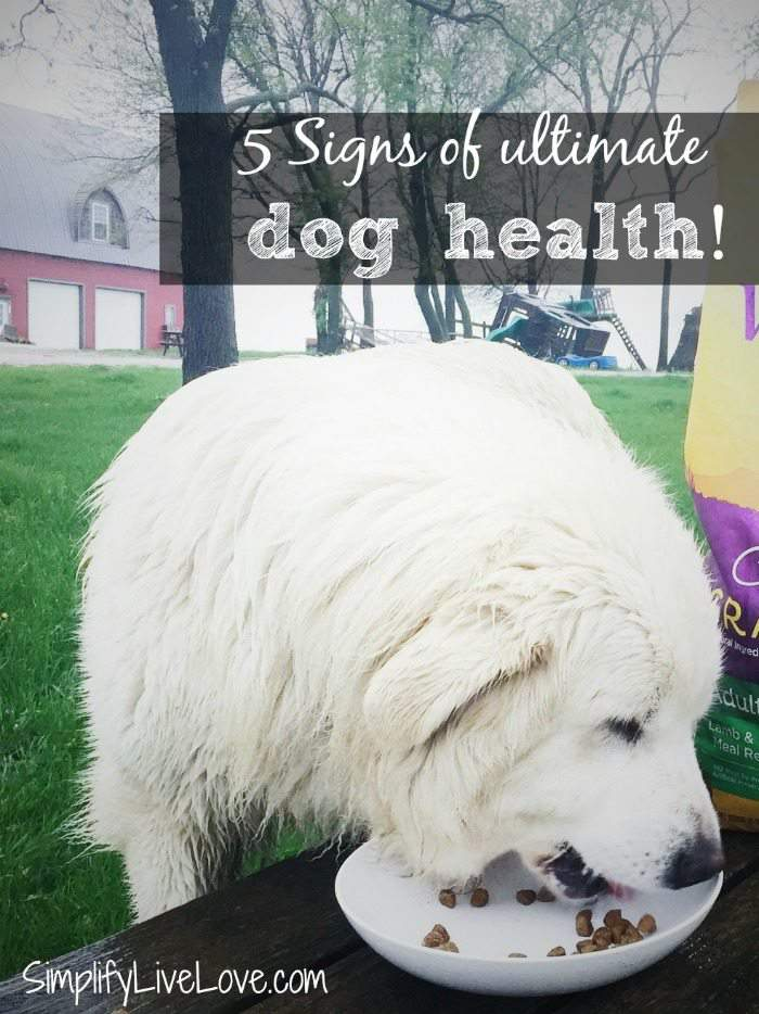5 Signs of Ultimate Dog Health
