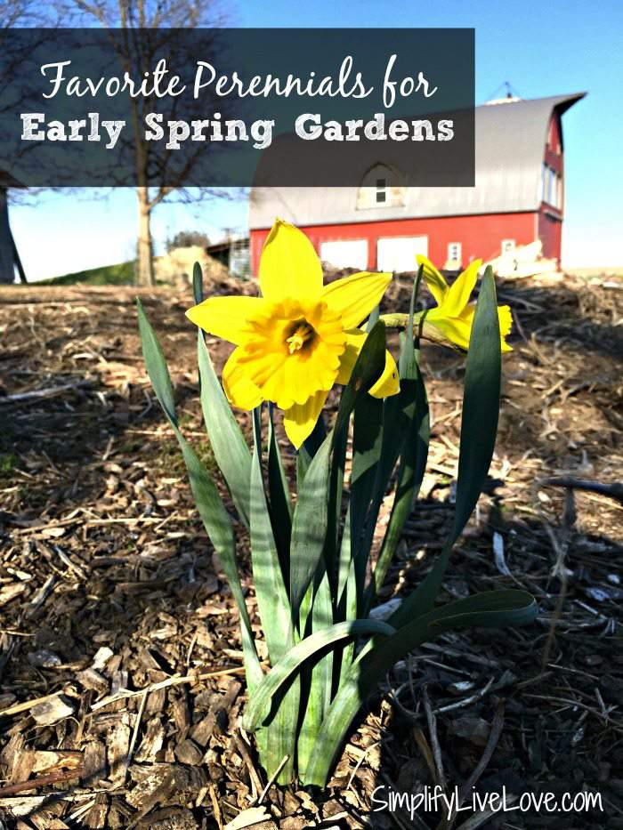 favorite perennials for early spring gardens