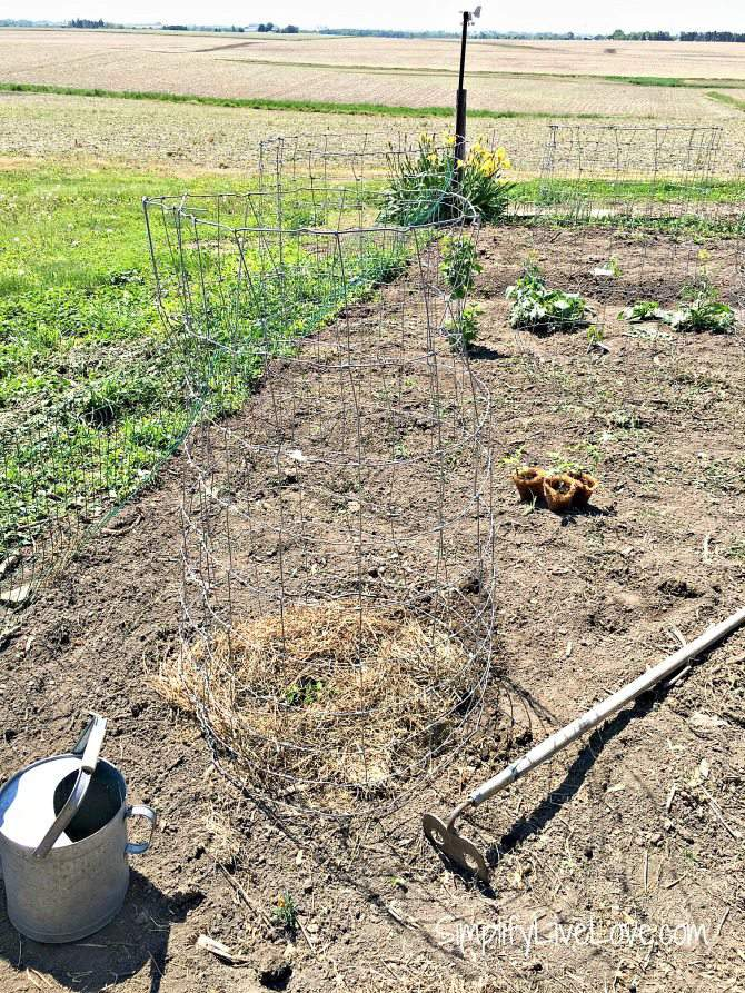 support tomatoes with homemade tomato cages