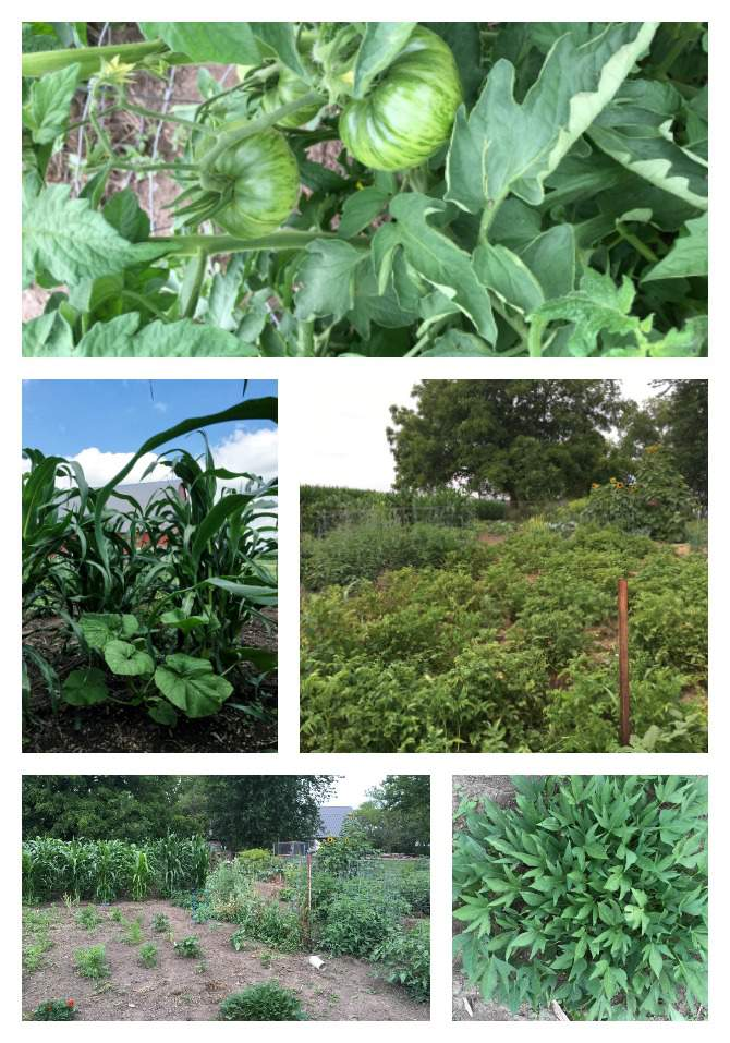 July Garden collage
