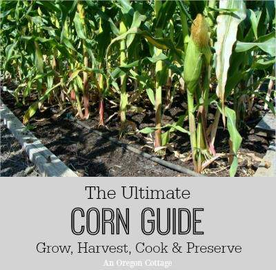 the ultimate corn guide