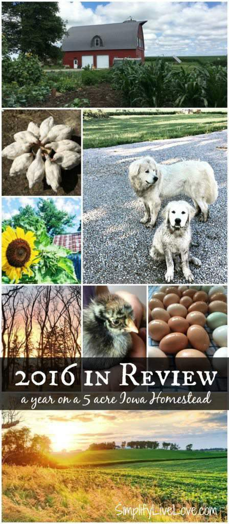 2016 in Review Our Year on a 5 Acre Iowa Homestead long pin