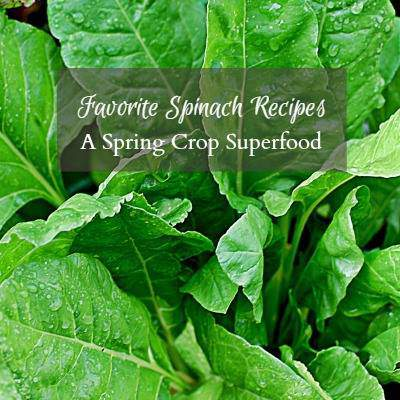 Favorite Recipes with Spinach