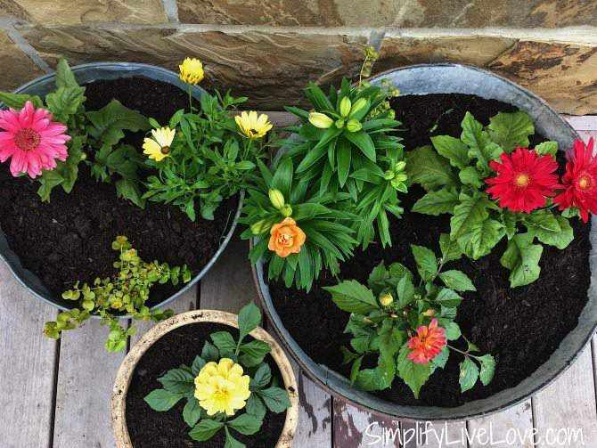 Cutting Flower Container Garden SLL